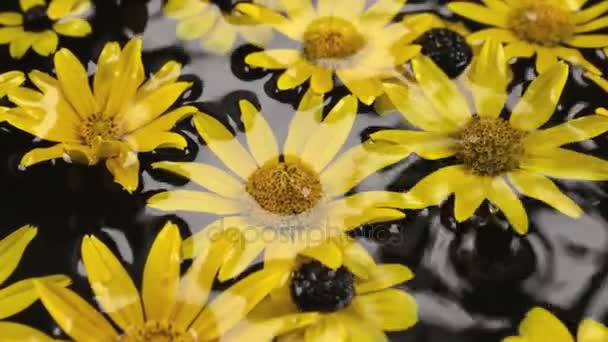 Closeup rain on chamomile petals with dew drops, spa concept.