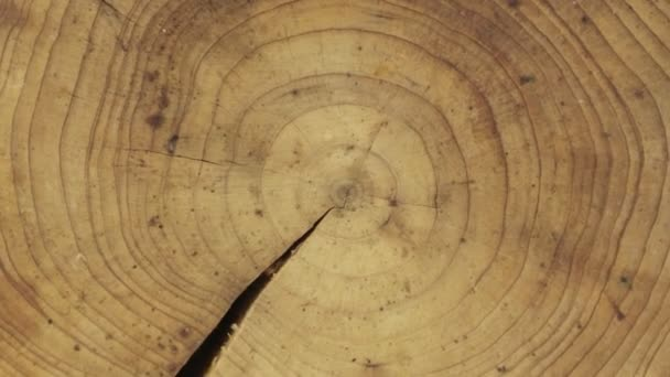 Detail příčného průřezu kmene stromu, rotace, izolované na zelené obrazovce.