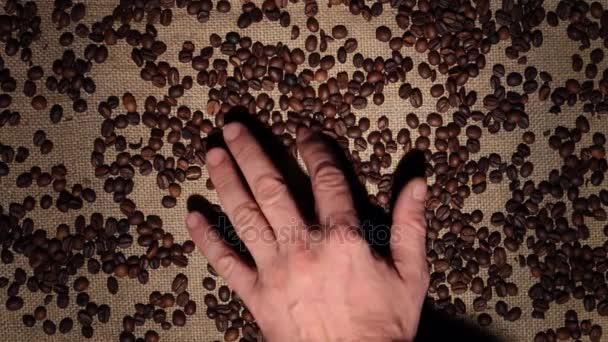 Pánská ruka čistí kávová zrna je rám fazole na pytlovina