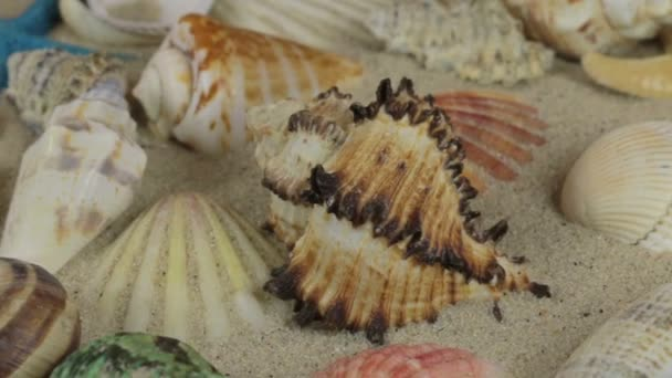 Rotation, hellbraun, schöne Muscheln und Seesterne auf Sand.