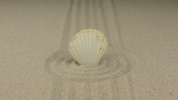Zoom einer weißen Muschel, die in einem Kreis aus Sand steht.