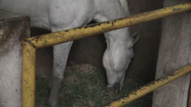 A ia egy video csíptet-ból ló
