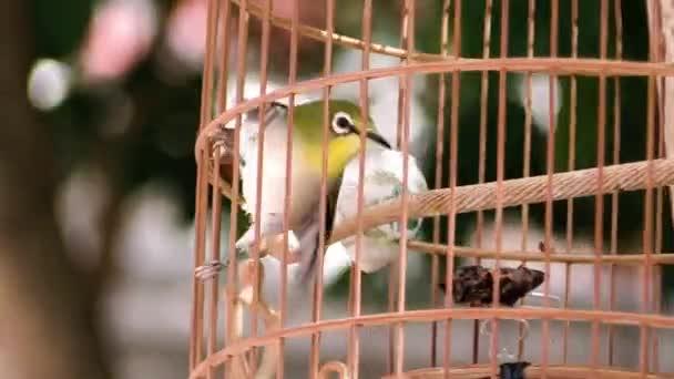 A ia egy video csíptet-ból madár