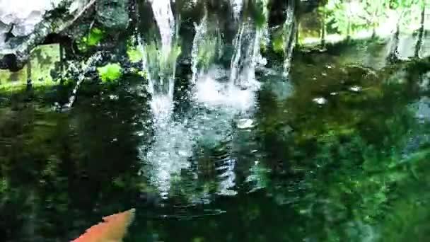 Dieses ia einen Videoclip von Fisch