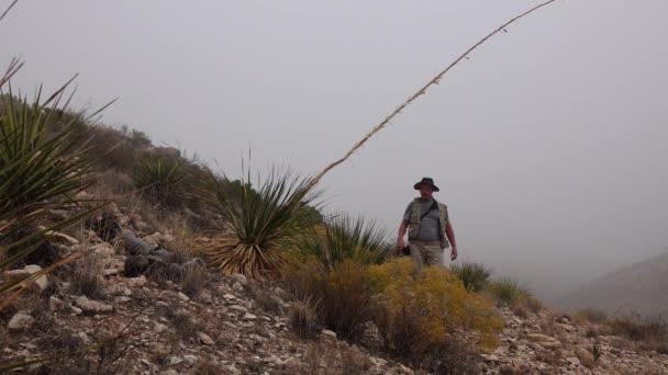 Egy férfi megvizsgálja az agávé zamatos szárát a hegyoldalon. Új-Mexikó