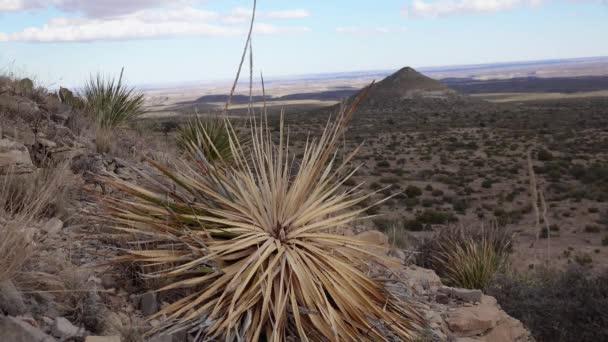Egy csapat zamatos kaktusz növény és egy kiszáradt yucca egy hegyoldalon egy kúp hegyével szemben, Új-Mexikóban.