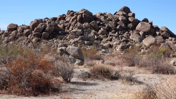 A panorámás kilátás nyílik a Joshua Tree Nemzeti Park. Józsué fa (Yucca brevifolia) és kőképződmények. Kalifornia