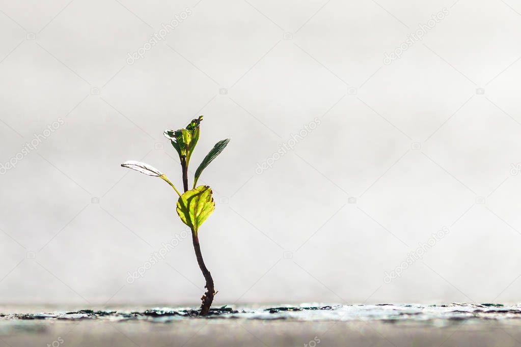 Green sprout breaks through asphalt