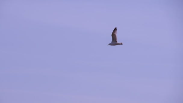 Bird Flies Away in the Gray Sky