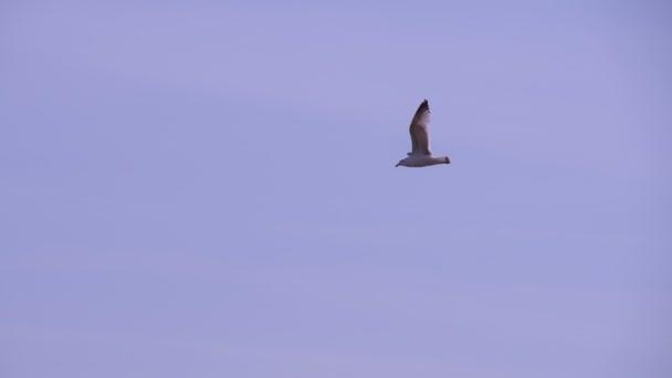 Pták letí pryč v šedivé oblohy