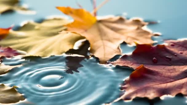 Raindrops are Falling in a Puddle with Leaves