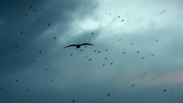 μεγάλο πουλί άσκηση μεγάλο μαύρο θηλυκό μουνί