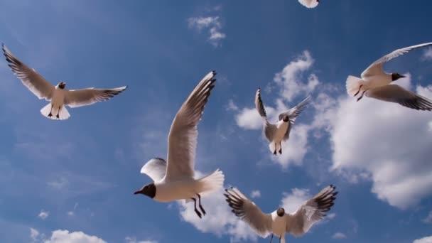 Szárnyaló madarak a kék ég, napsütéses napon