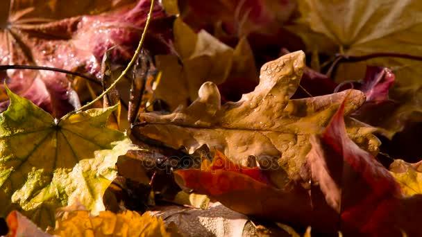 Regen Druppels Herfst Bladeren Natte Gevallen Herfstbladeren Worden ...