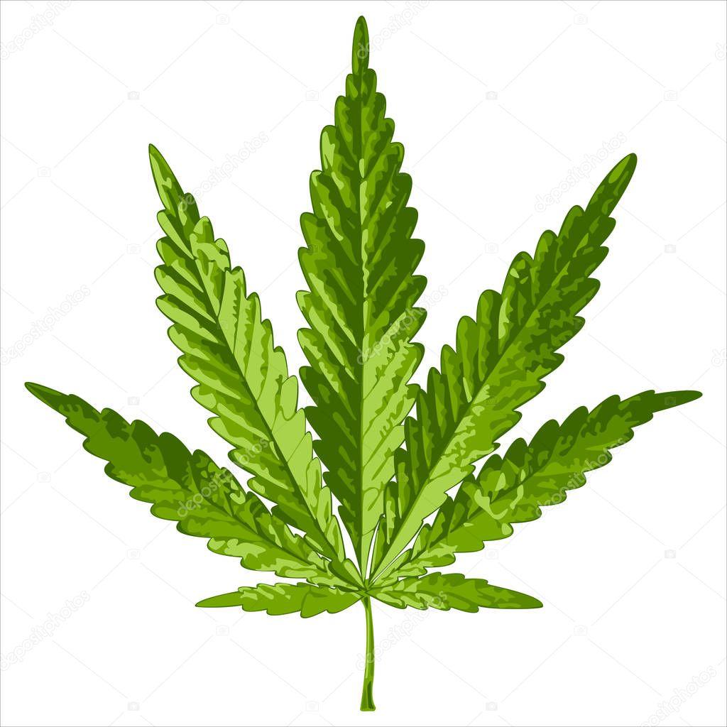 realistic leaf cannabis