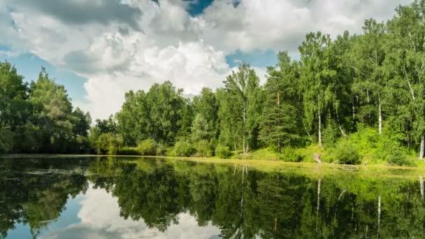 Rybník s kachny v lese