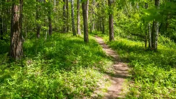 Fußweg im Sommerwald.