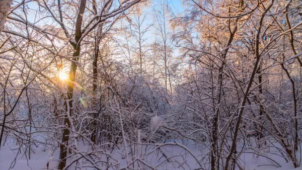 Napos téli este az erdőben. Időintervallum.