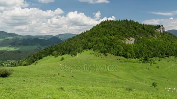 Ovce na čerstvé zelené pastvě časová prodleva. Rychlé přesouvání ovce a mraky