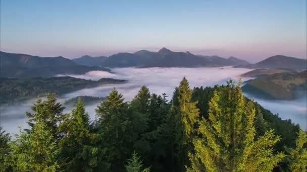 Východ slunce mlha ráno přes les a mlhavé údolí časová prodleva. Stromy a mlha, pohybující se ve větru. Letecká Veiw Dolly Shot