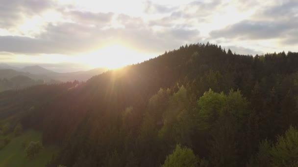 Letecký pohled přes zelený les při západu slunce. Večerní let nad stromy mávat ve větru