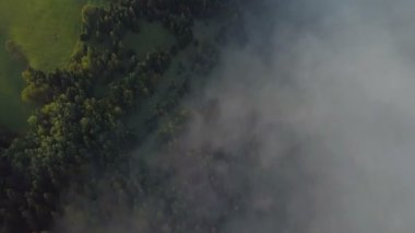 Aerial view of beautiful foggy forest with golden morning colors