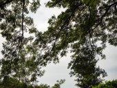 Grande albero e priorità bassa del cielo
