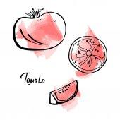 Vektorové Sada ručně tažené rajče s plátky na akvarel zázemí. Šablona návrhu šťáva