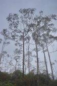 Siluette degli alberi sullo sfondo del cielo