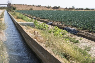 Water canal Irrigation of plants