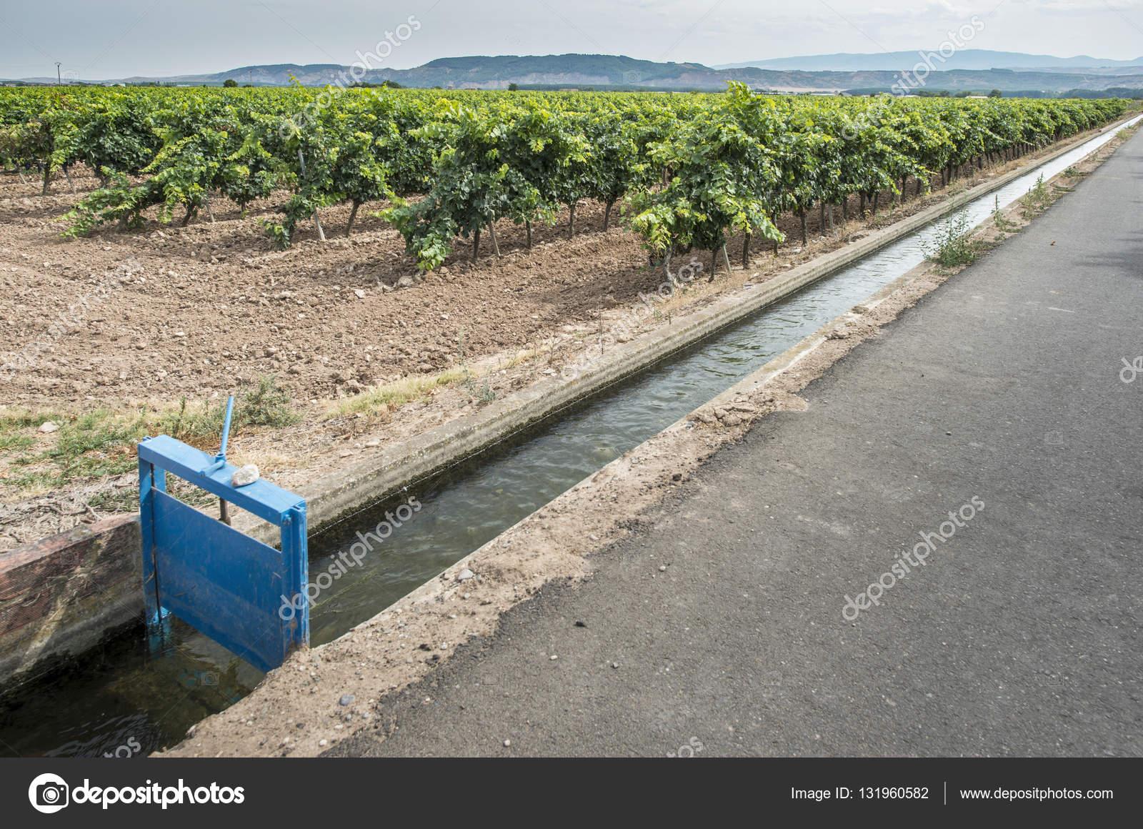 1204 : Marie la morte  Depositphotos_131960582-stock-photo-vineyards-and-close-up-irrigation
