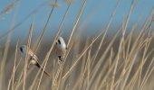Fotografie Béžové a černé ptáky