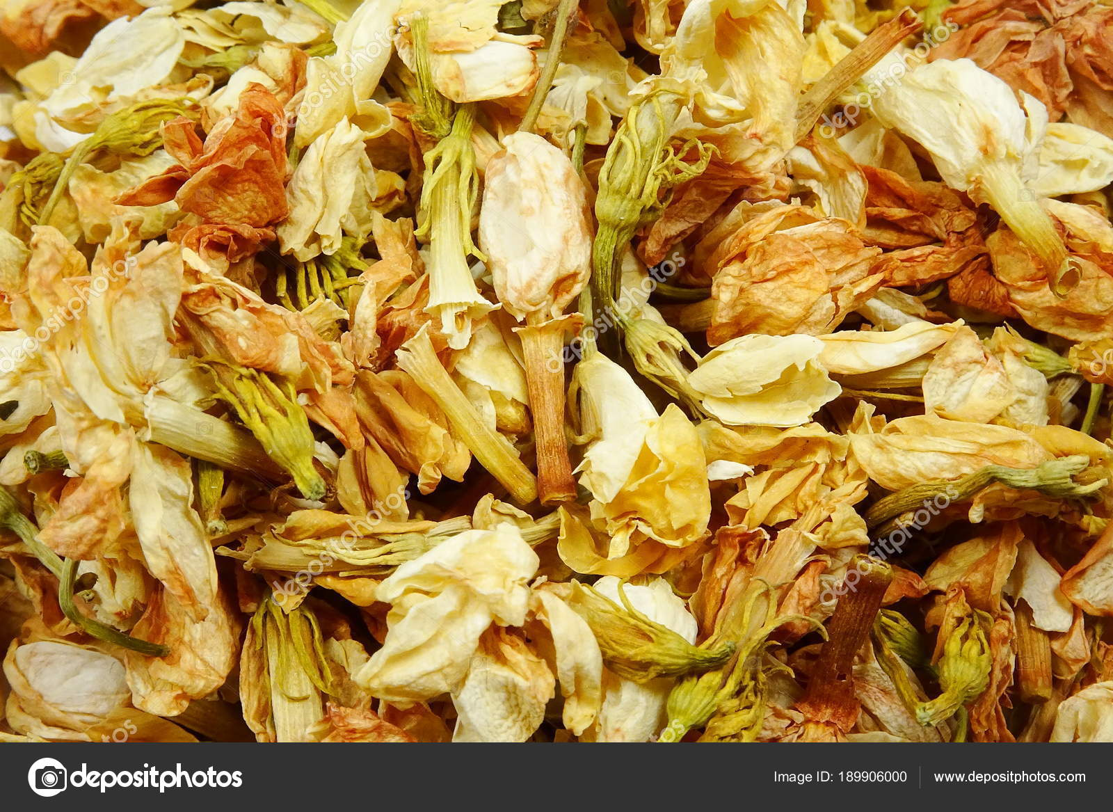 Dried Jasmine Flowers Jasminum Stockfoto Lukaszudzien 189906000