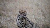 gepard na pohotovosti