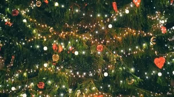 Karácsonyfa: a Városháza tér.