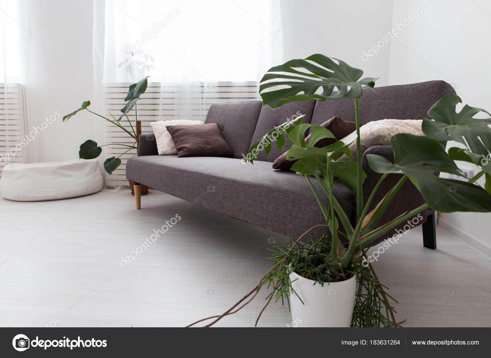Moderne Studio Apartment Mit Lebenden Pflanzen. Grau Im Inneren. Sofa Im  Wohnzimmer U2014