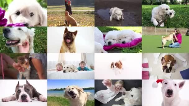 láska k domácím zvířatům. psi a jejich majitelé, koláž.