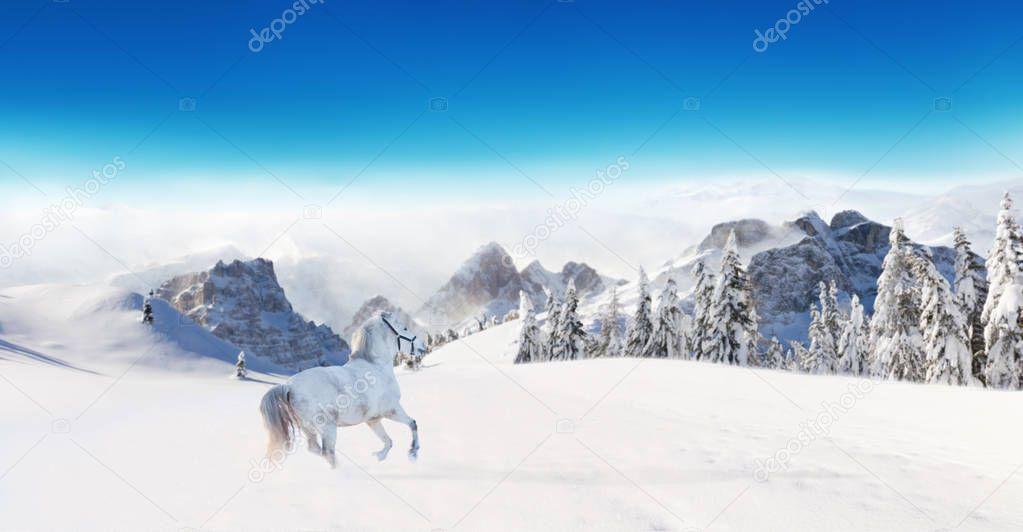 White horse running in winter landscape