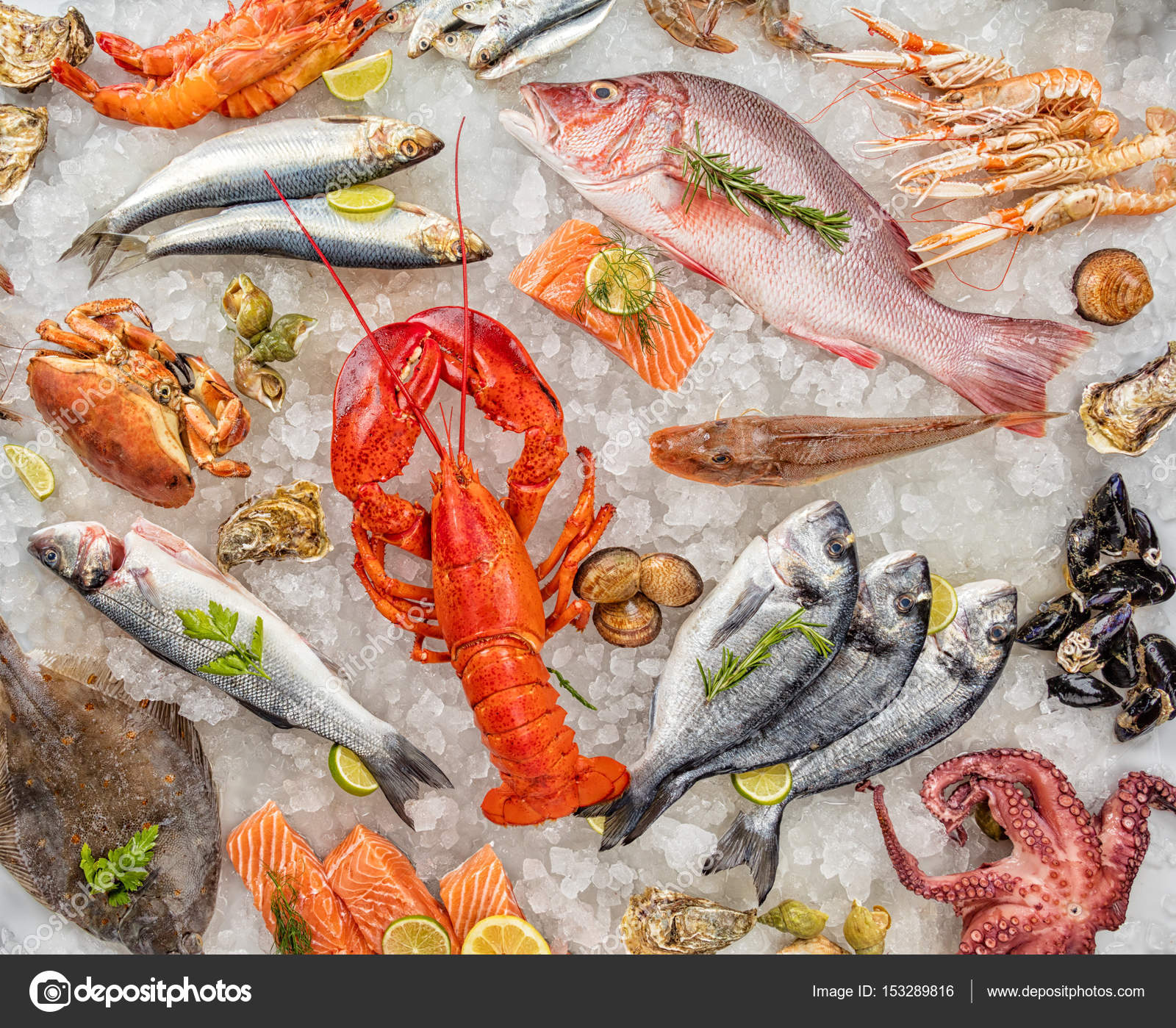Muchos tipos de pescados y mariscos servidos sobre hielo for Canelones de pescado y marisco