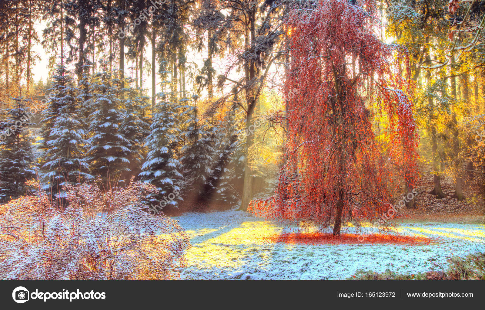 outdoor nature photography. Beautiful Colored Trees In Autumn, Landscape Photography. Snow On Background. Late Autumn And Early Winter Period. Outdoor Nature. \u2014 Photo By Jag_cz Nature Photography C