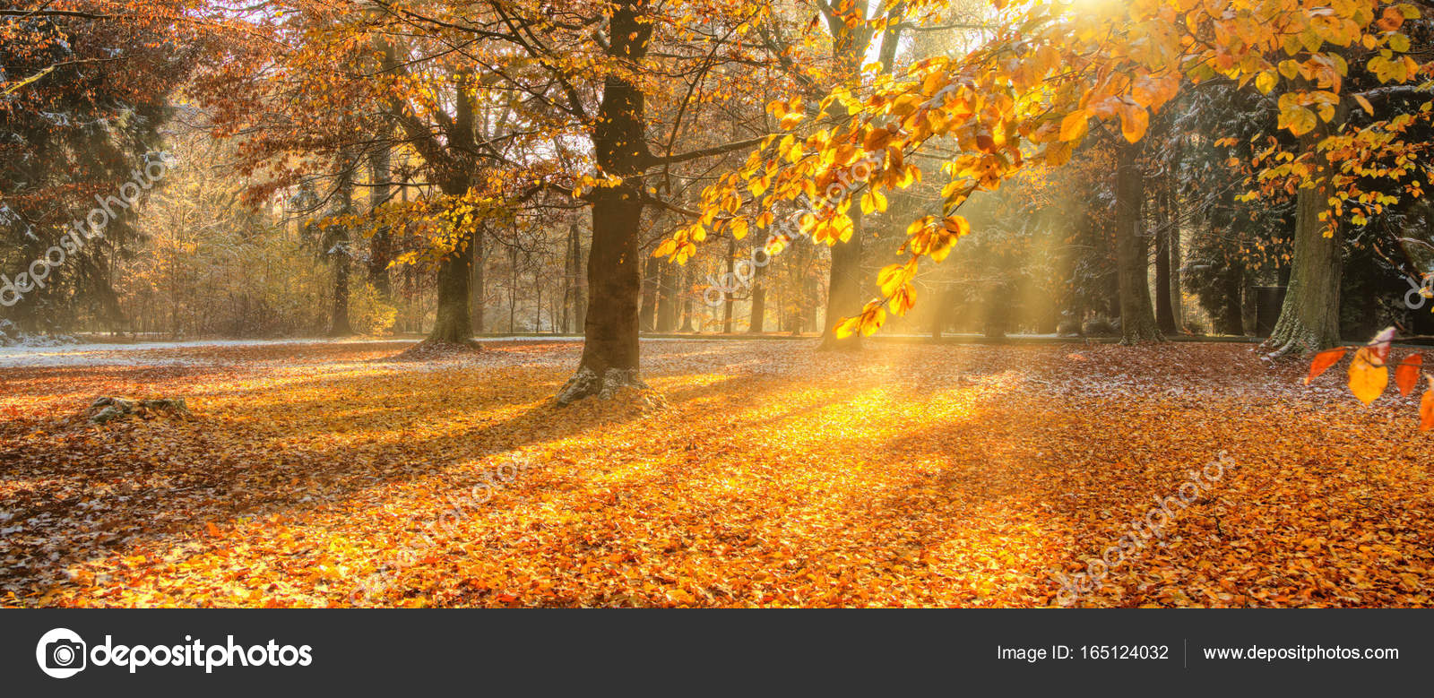outdoor nature photography. Beautiful Colored Trees In Autumn, Landscape Photography. Snow On Background. Late Autumn And Early Winter Period. Outdoor Nature. \u2014 Photo By Jag_cz Nature Photography