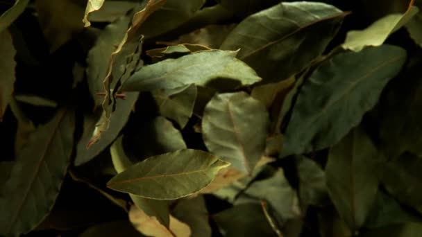 Super slow motion of flying whole dry bay leaves spice. Filmed on high speed cinema camera, 1000 fps