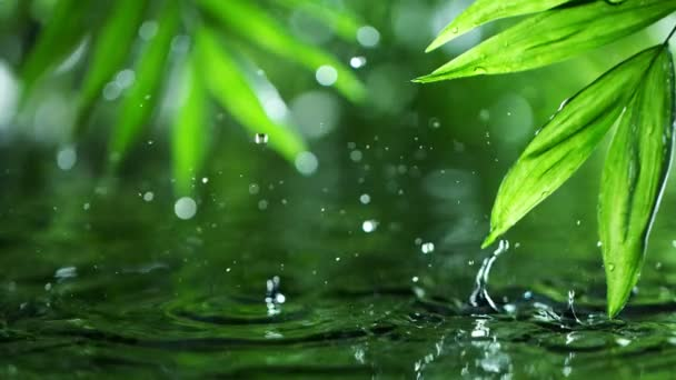 Super slow motion of dropping water with palm leaf, spa and wellness concept. Filmed on very high speed cinema camera, 1000 fps.