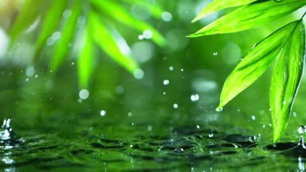 Super zpomalení kapání vody s palmovým listem, lázeňskou a wellness koncepcí. Natočeno na vysokorychlostní kameře, 1000 snímků za sekundu.