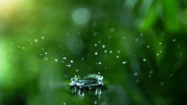 Super pomalý pohyb padající vody z listu. Natočené na vysokorychlostní filmové kameře, 1000 fps. Super-makro čočka.
