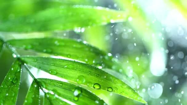 Super zpomalení cákání kapek vody na palmové listy, lázeňské téma. Natočeno na vysokorychlostní kameře, 1000 snímků za sekundu.