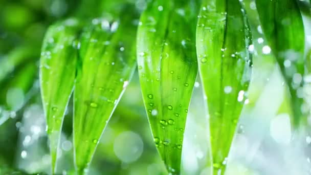 Super slow motion of splashing water drops on palm leaves, spa theme. Filmed on very high speed camera, 1000 fps.
