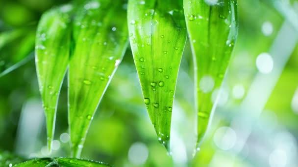 Super Zeitlupe von plätschernden Wassertropfen auf Palmblättern, Wellness-Thema. Gefilmt mit einer Hochgeschwindigkeitskamera, 1000 fps.