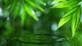 Palmové listy s hladinou vody