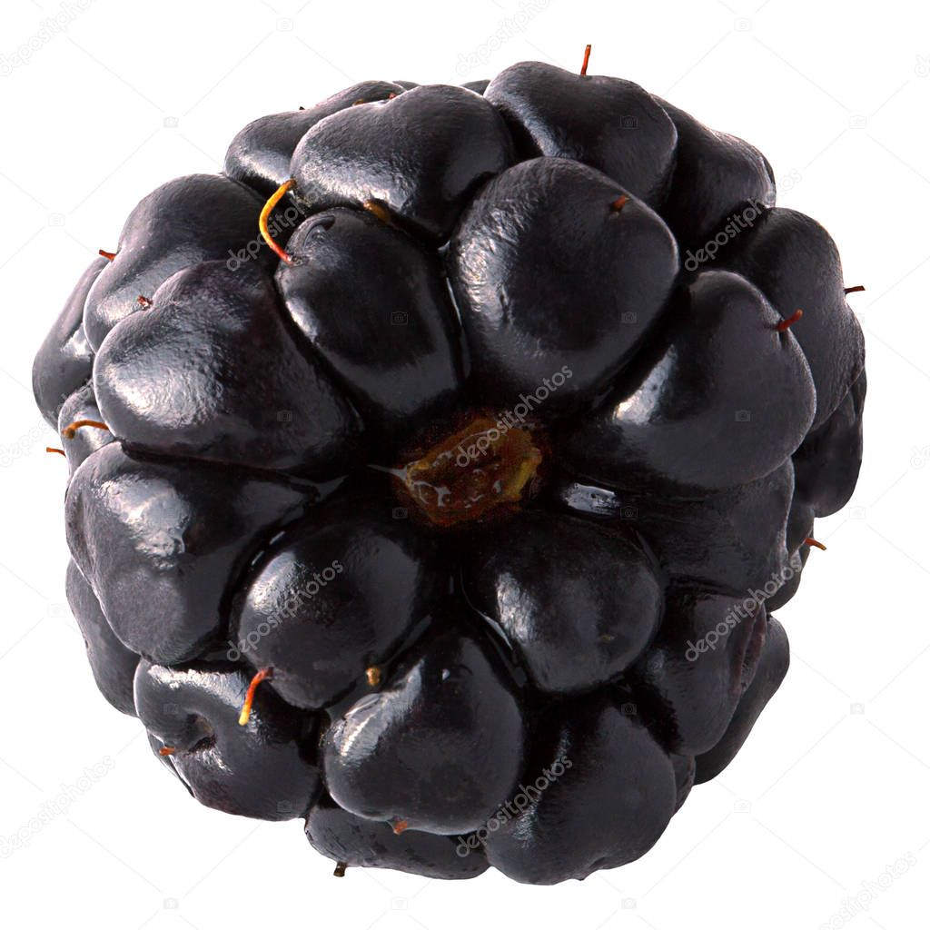 Fresh Blackberry isolated on the white background